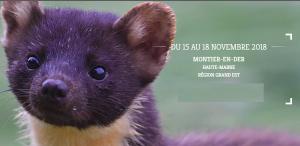 22ème FESTIVAL PHOTO ANIMALIÈRE ET NATURE (MONTIER-EN-DER) @ Montier-en-Der | Montier-en-Der | Grand Est | France