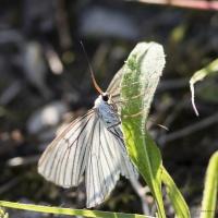Papillon qui se réchauffe