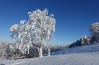 Première neige