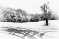 Dorans en hivers