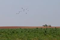 Travaux de printemps dans les champs