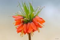 Fleur sans nom