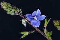 Fleur de mon jardin - Macro