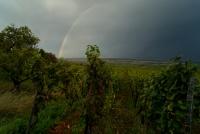 orage sur les vignes-DSC06989.jpg