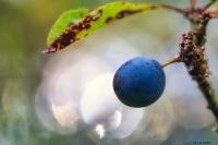 une prunelle